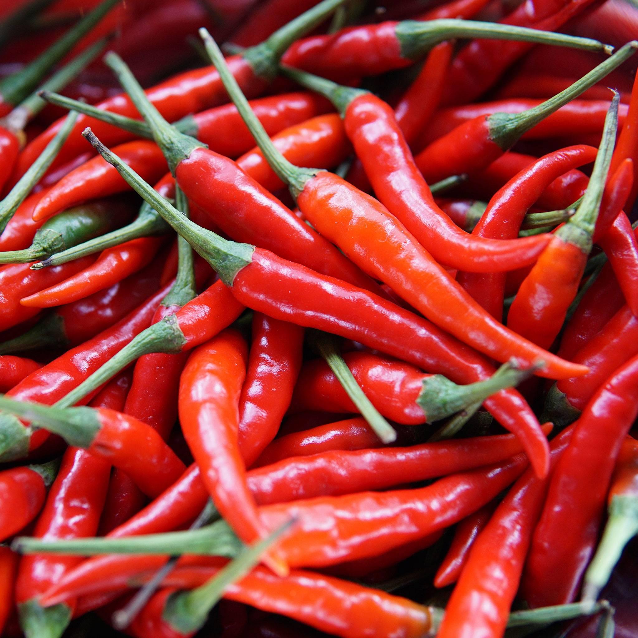 Røde friske chilier